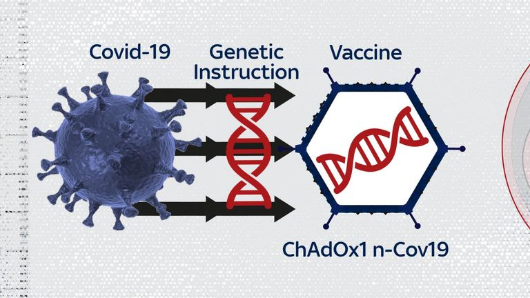 The Oxford vaccine is based on another virus, which has been adapted to carry a payload from the coronavirus. The genetic instructions then make the its unique spike protein.