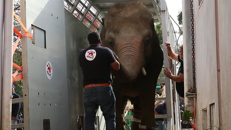 The world's loneliest elephant is rehomed after efforts by Cher and other animal rights activists.