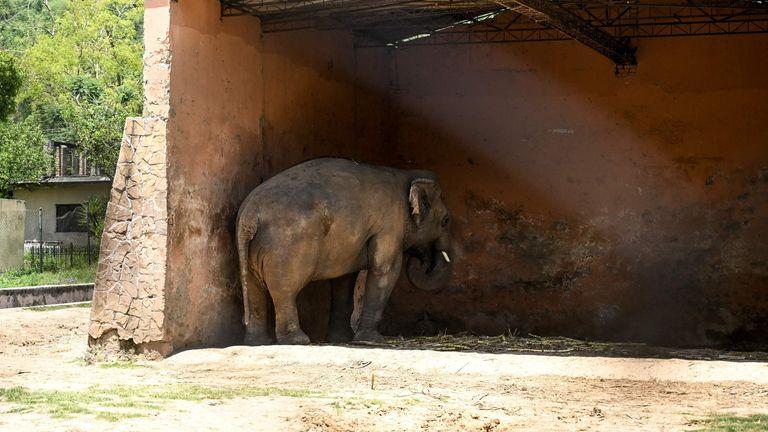 أمضى كافان 35 عامًا في الشعور بالوحدة في حديقة حيوان في باكستان