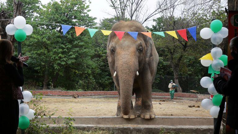 يتم نقل الفيل الأكثر وحدة في باكستان إلى منزل جديد في كمبوديا