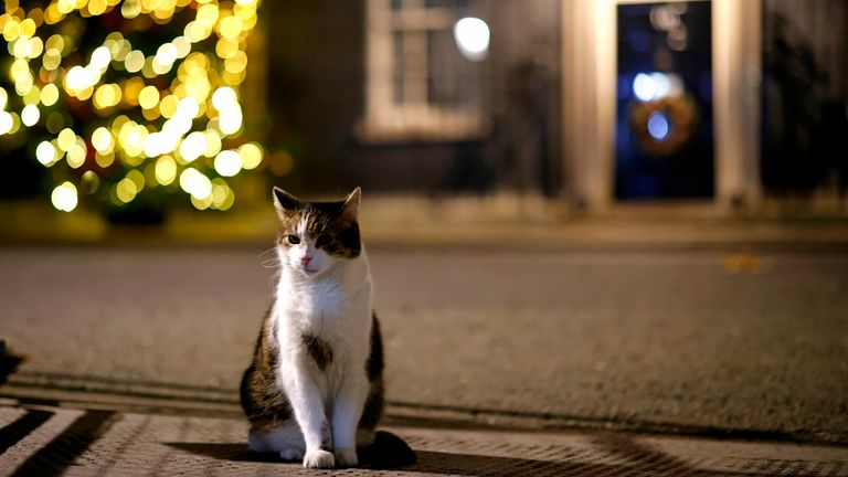 Larry, the 10 Downing Street cat sits in the street with the Christmas tree behind in central London on November 28, 2020. (Photo by Tolga Akmen / AFP) (Photo by TOLGA AKMEN/AFP via Getty Images)