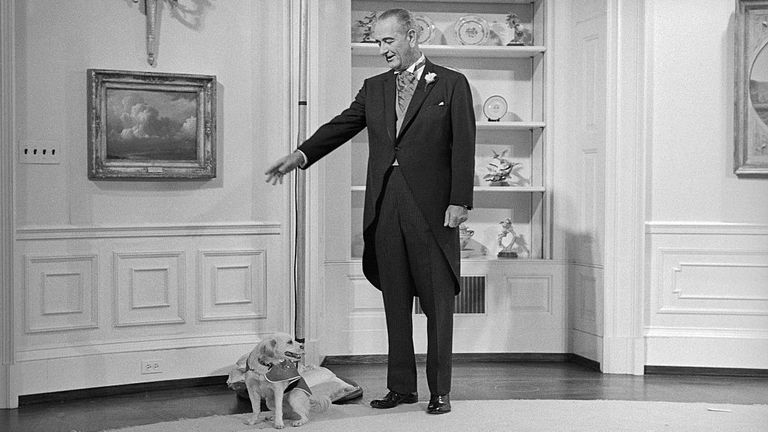 President Johnson orders his pet dog, Yuki, out of the Yellow Oval Room today where formal pictures were being taken following Lynda Johnson's marriage to Marine Captain Charles Robb in the East Room on the White House.