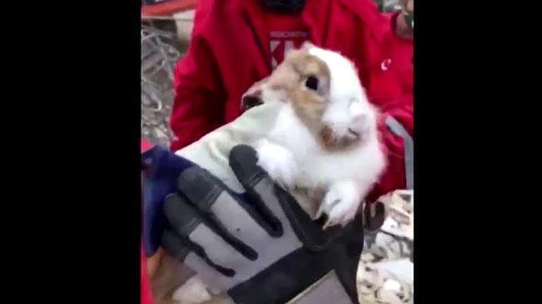 A pet rabbit was also saved by rescuers in Izmir, Turkey