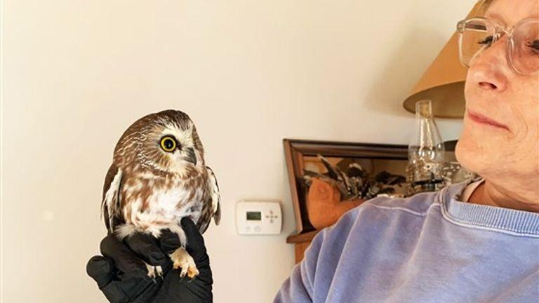 Pic: Ravensbeard Wildlife Centre