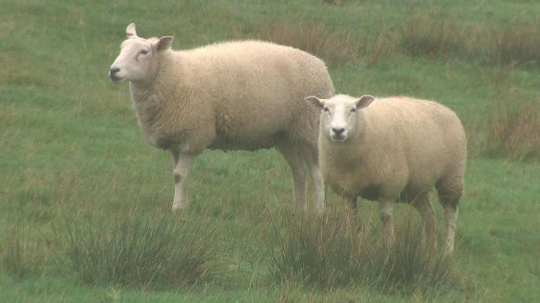 Farmers say the value of wool is not covering costs