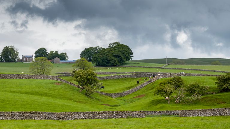 "SMARDALE GILL, YORKSHIRE, UNITED KINGDOM: Sheep grazing in meadow and dry stone wall in Yorkshire Dales at Smardale Gill, England""n. (Photo by Tim Graham/Getty Images)"