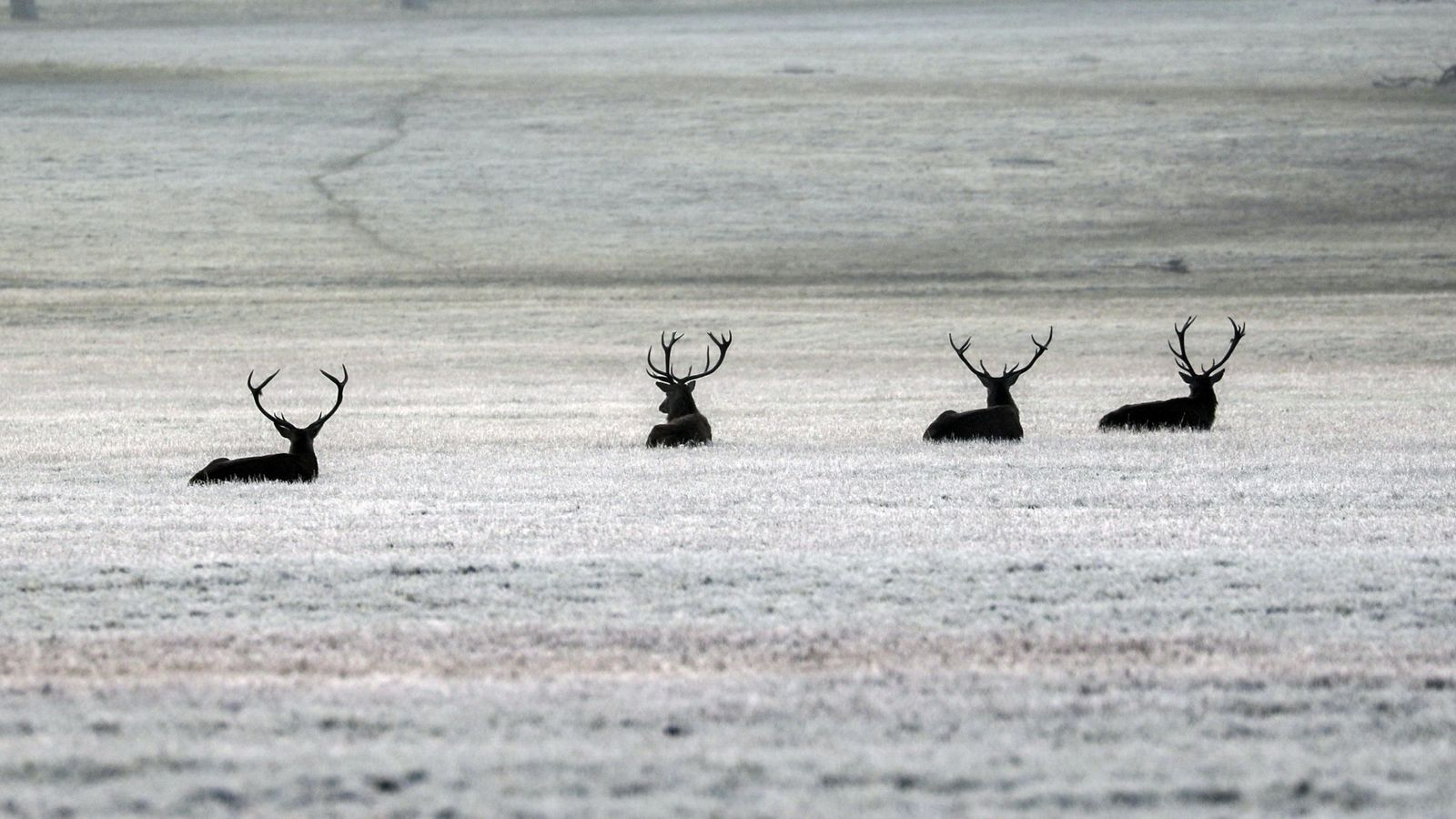 Frost, snow and hail as England's lockdown ends and winter begins