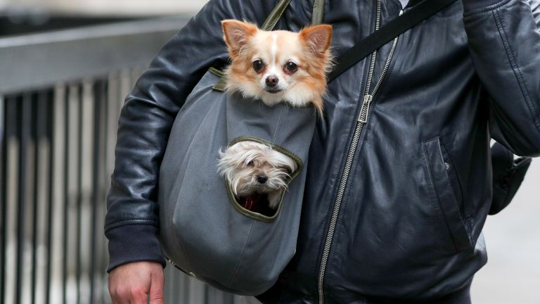 EMBARGOED TO 0001 MONDAY AUGUST 03 File photo dated 09/04/18 of two dogs being carried in a bag along the street in Marylebone in London. Half of adults are worried about leaving their pets at home if they go back to work, new research suggests.
