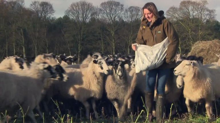 Farmers nationwide nervously await news of a Brexit deal