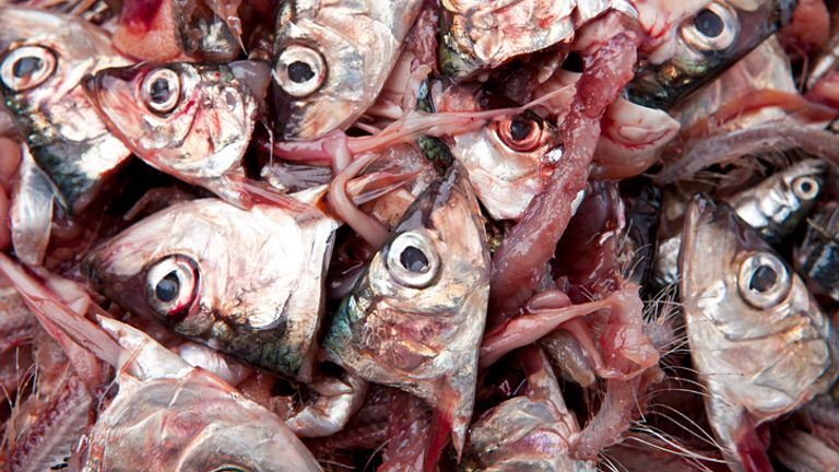Some people have reported a strong odour of fish, months after contracting the virus