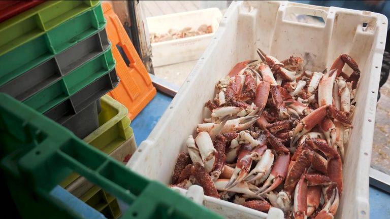 Dead fish . Parsons brexit pkg