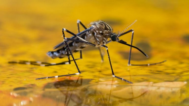 Malaria is a mosquito-borne infectious disease that affects humans and other animals