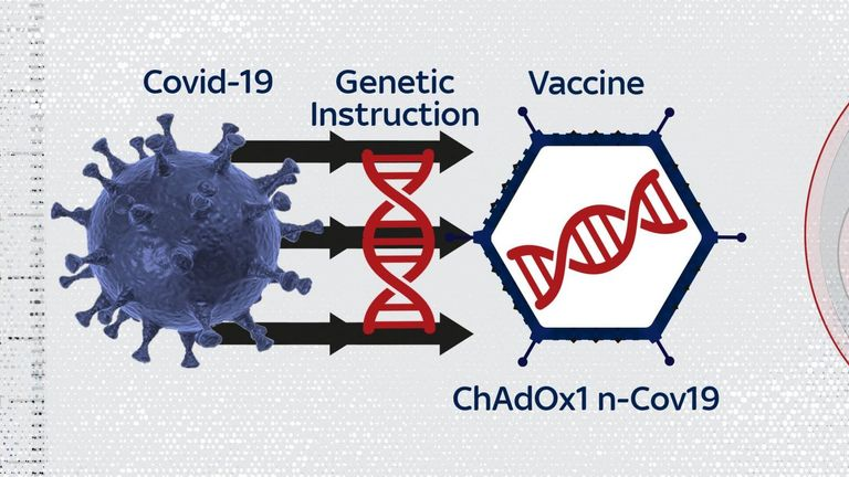 The Oxford vaccine is based on another virus, which has been adapted to carry a payload from the coronavirus