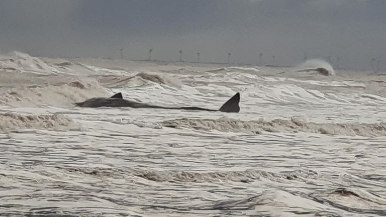 Handout photo issued by British Divers Marine Life Rescue (BDLMR) showing one of group of whales which have been beached on a stretch of coastline between the villages of Tunstall and Withernsea in East Yorkshire.