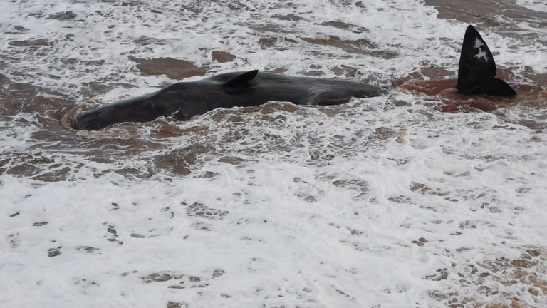 At least four of the pod have washed up on shore