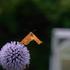 skynews lund university butterfly 5243787