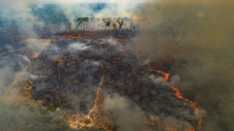 Last year, Brazil's Amazon rainforest had suffered the worst fires in a decade.