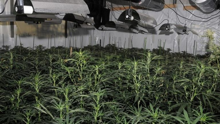 A picture of the cannabis factory. Pic: City of London Police