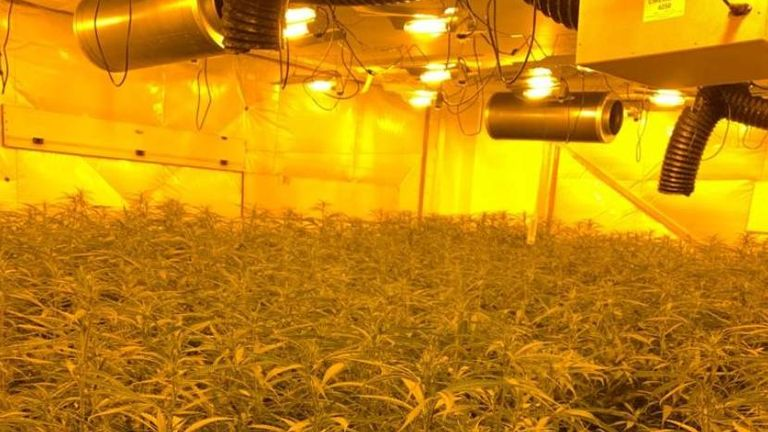 Police have arrested five men after raiding a London cannabis farm worth up to £1m. Source : Met Police
