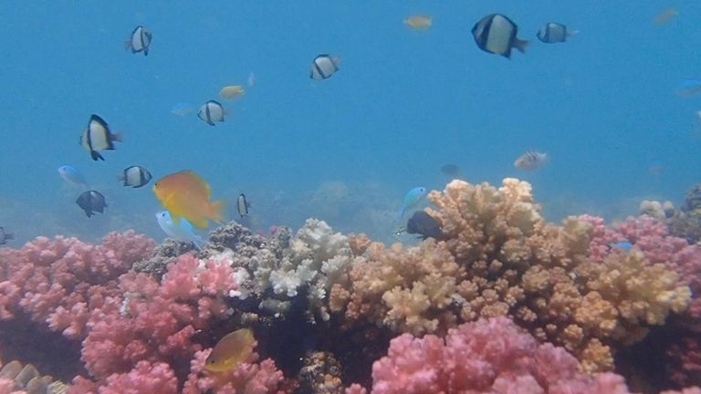 British students develop a way to rebuild damaged coral reefs