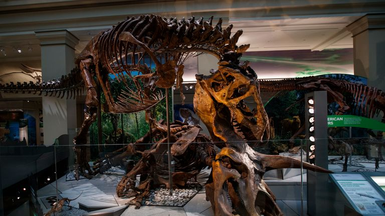 T-rex was up to 12 metres long and weighed seven tonnes Pic: AP