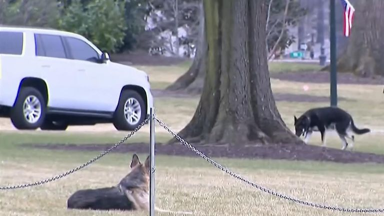 The sound of dogs barking is being heard in the White House again following the arrival of President Joe Biden's German shepherds