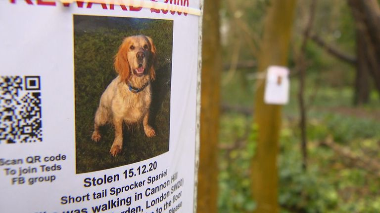 The Jasper family are offering a £5,000 reward for Ted's return