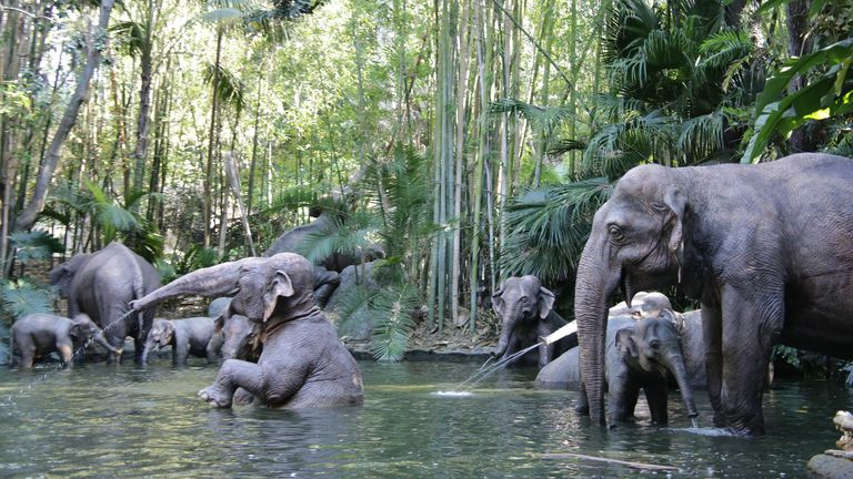 Disneyland's Jungle Cruise Attraction in California, 2017