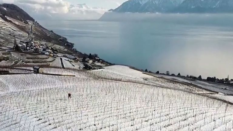 Snow coats vineyard in Switzerland