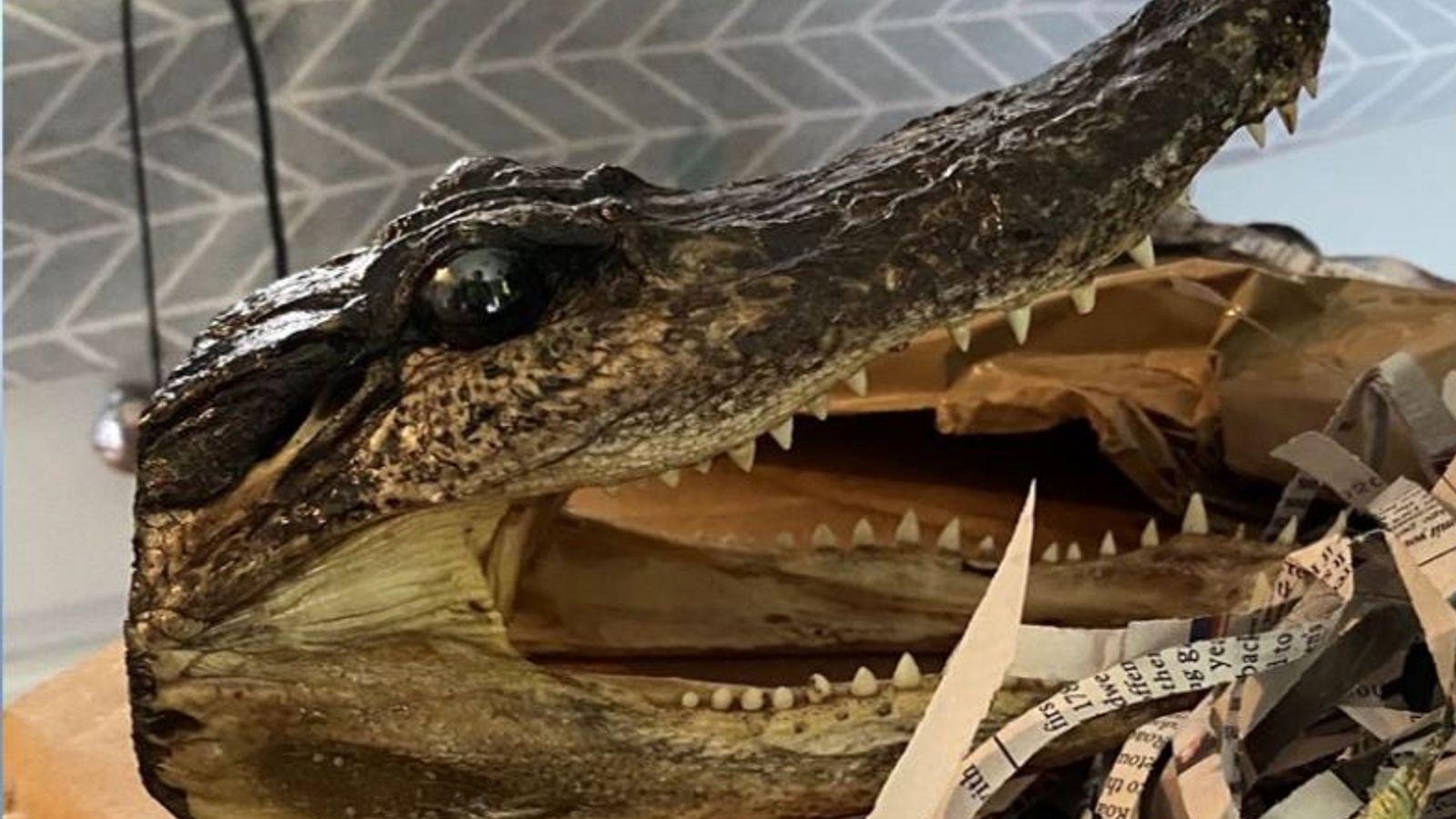 Eighty alligator heads seized in police raid on house in Birmingham