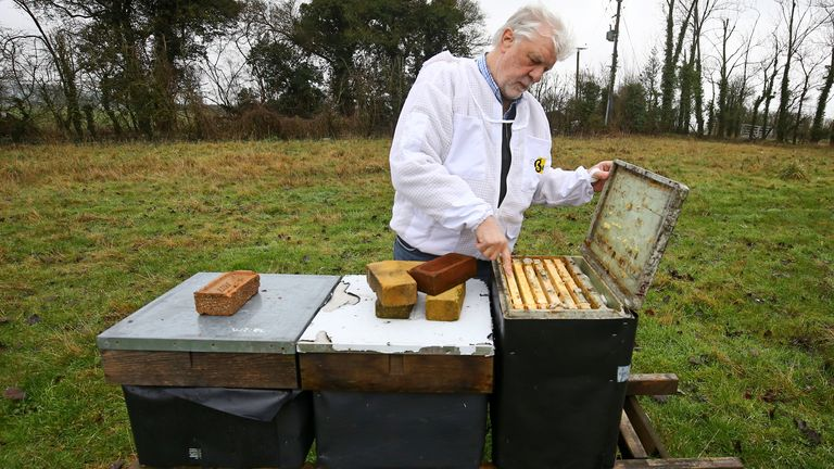Patrick Murfet wants to import the baby Italian bees for his Kent business and to help farmers pollinate valuable crops