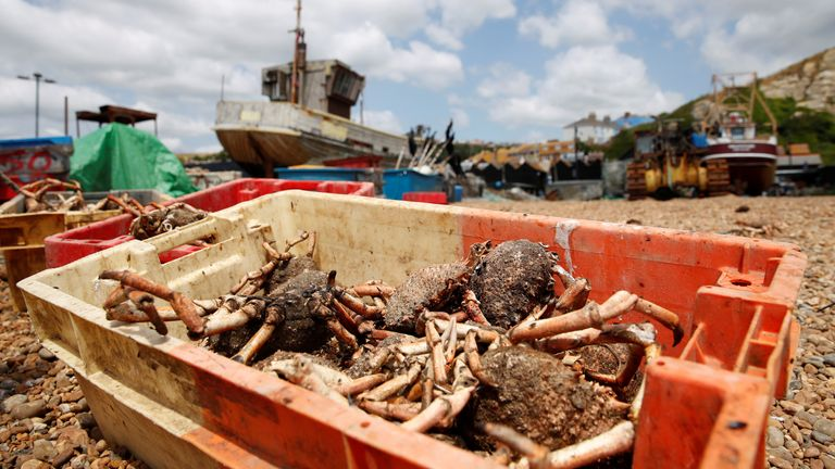 Spider crabs could be renamed to increase their appeal to diners