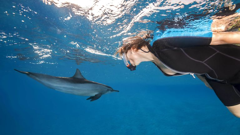 August 2, 2018 - Red Sea, Sataya Reef, Marsa Alam, Egypt, Africa - A woman in a mask look at on Spinner Dolphin. (Credit Image: . Andrey Nekrasov/ZUMA Wire/ZUMAPRESS.com)