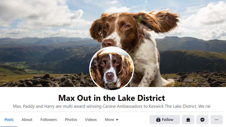 Max the 13-year-old Spaniel has been given the PDSA Order of Merit for giving therapy to thousands during the COVID pandemicPic: Facebook Max Out In the Lake District