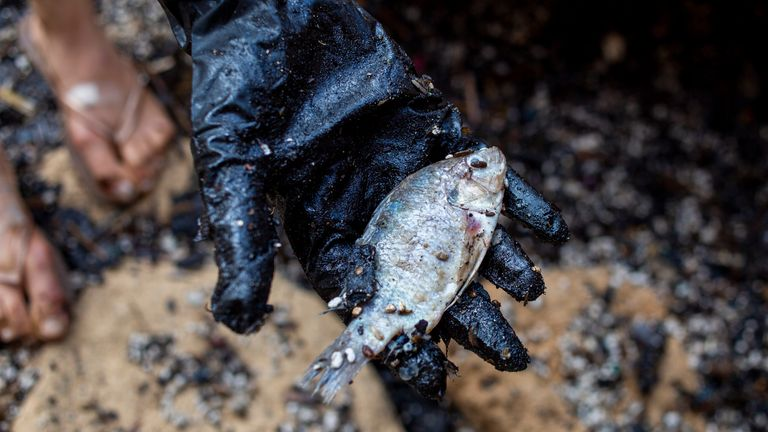 A woman holds a dead fish after she cleaned it from tar from an oil spill in the Mediterranean sea in Gador nature reserve near Hadera, Israel, Saturday, Feb. 20, 2021. Hundreds of volunteers are taking part in a cleanup operation of Israeli shoreline as investigations are underway to determine the cause of an oil spill that threatens the beach and wildlife, at Gador Nature Reserve near the northern city of Hadera, the tar smeared fish, turtles, and other sea creatures. (AP Photo/Ariel Schalit)