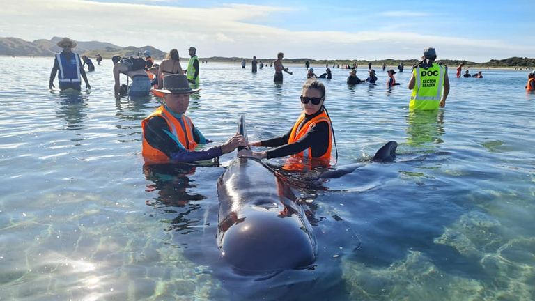 Rescued whales. Pic: Project Jonah