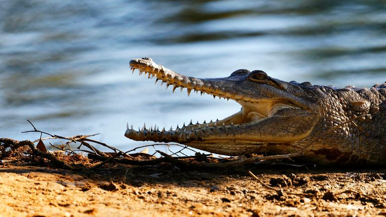 Experts have concluded it is 'highly likely' the missing fisherman was attacked by a crocodile. Pic: AP