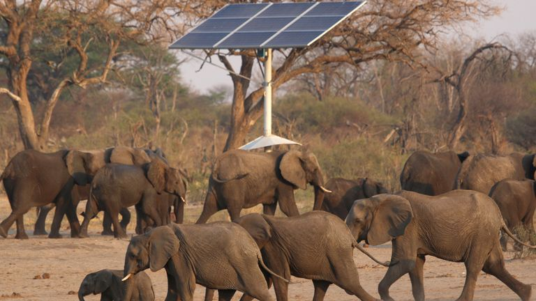 A group of elephants walk near a solar panel at a watering hole inside Hwange National Park, in Zimbabwe, October 23, 2019. REUTERS/Philimon Bulawayo