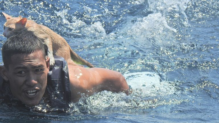 A Thai navy officer swims with a rescued cat on his back in the Andaman Sea. PIC:  PO1 Wichit Pukdeelon via Reuters