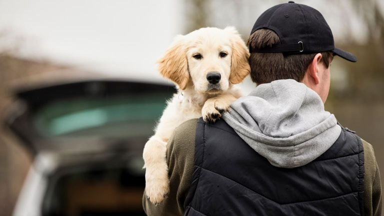 Nottinghamshire Police said the new role will focus on canine crime following concern about growing cases of dog theft. Pic: File