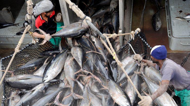 کارگران ماهی تن را از یک قایق ماهیگیری در بندر ویکتوریا تخلیه می کنند