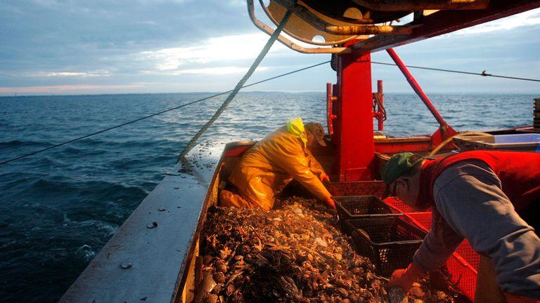 ماهیگیران صید صبح زود را با سوار یک دستگاه تریل در غرب فرانسه مرتب می کنند