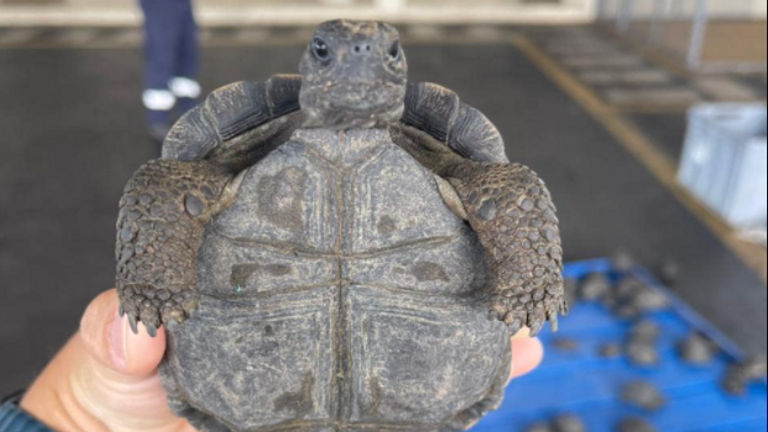 Airport workers at Ecuador's Galapagos Islands airport opened a suitcase to find 185 tortoises, most of them live. Pic: Aeropuerto ecologico Galapagos