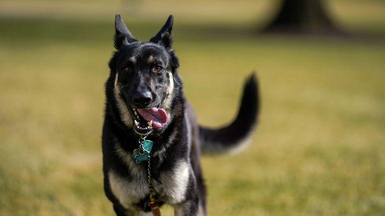 Major, one of the Biden family dogs