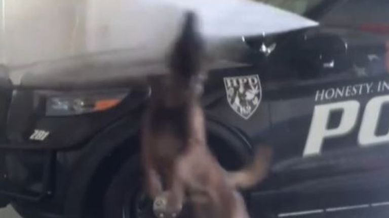 Police dog dances in water jets as patrol car is washed