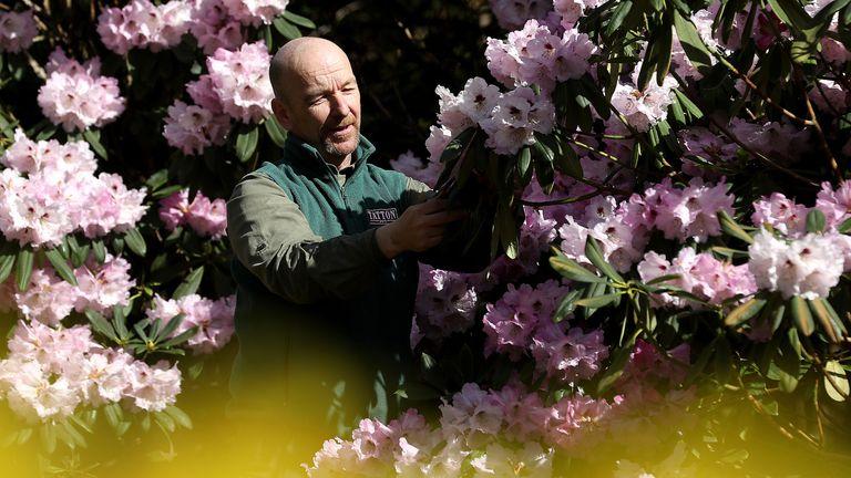 Head gardener Simon Tetlow prepares for the return of visitors to Tatton Garden's, Tatton Park in Knutsford, Cheshire