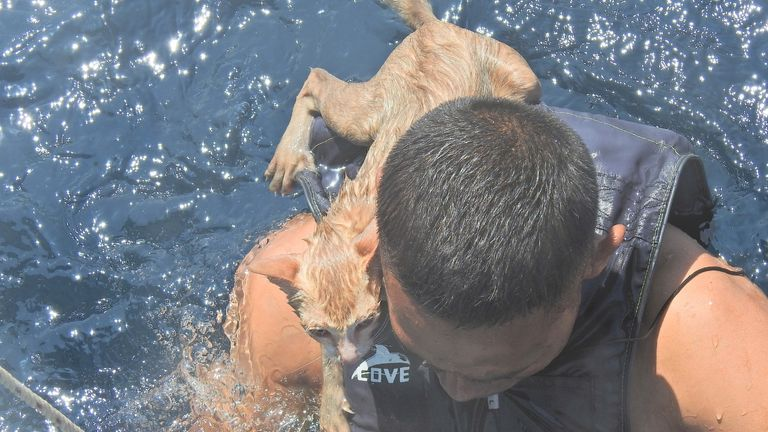 A Thai navy officer swims with a rescued cat on his back in the Andaman Sea. PIC PO1 Whichit Pukdeelon via Reuters