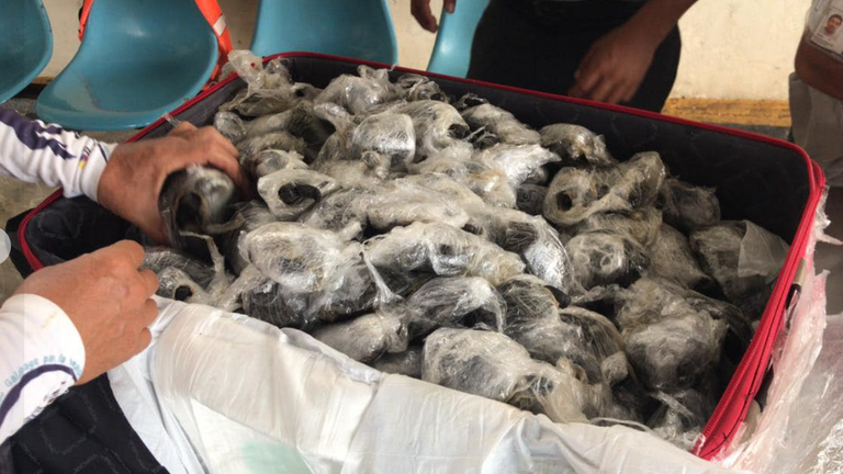"Airport workers in the Ecuador's Galapagos Island found 185 baby turtles inside a suitcase. Pic: ""Aeropuerto ecologico Galapagos"""