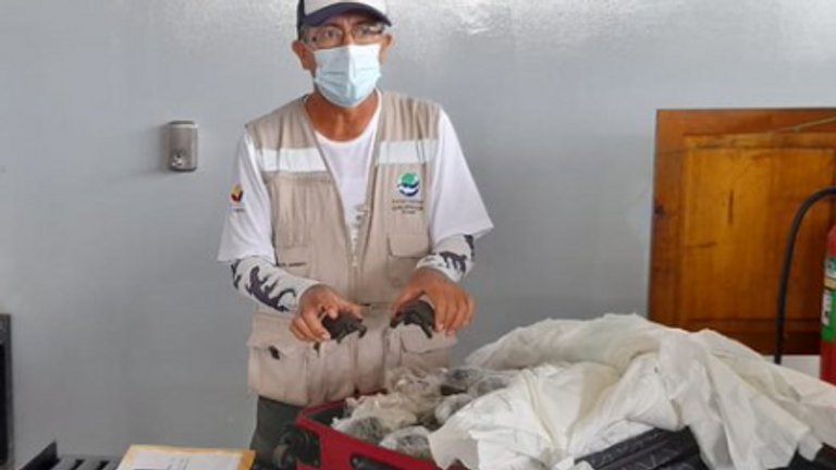 Airport workers in the Ecuador's Galapagos Island found 185 baby turtles inside a suitcase. Pic: Ecuadorian Environment Department