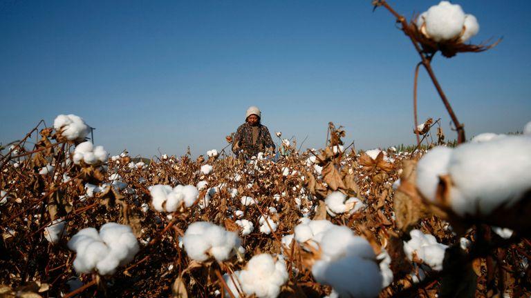 A worker in a cotton field in Aksu, Xinjiang